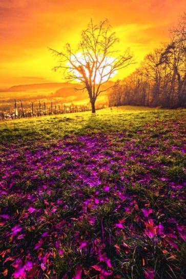 foto sol flores 2 m